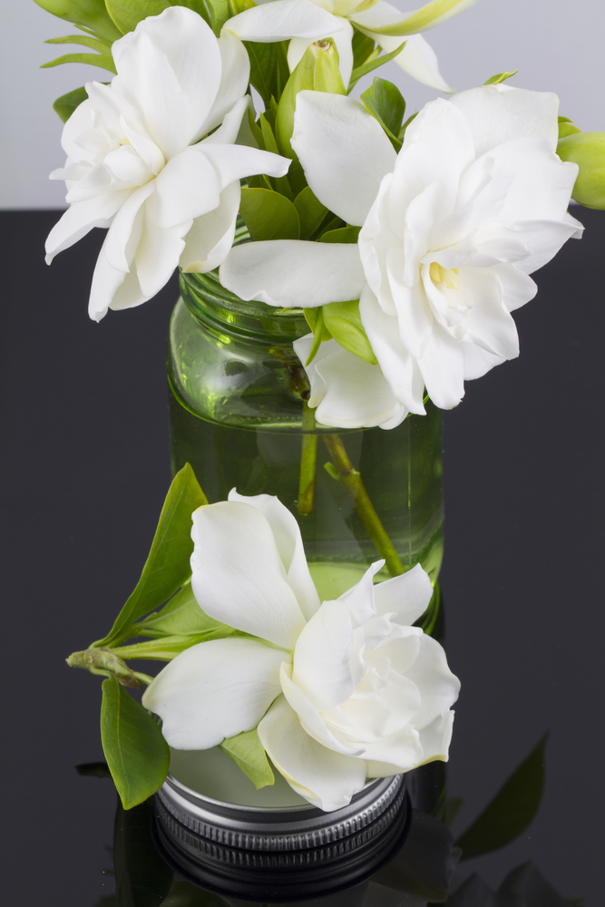 Gardenias ~ 10 Most Common Flowers and Their Meanings ~ https://facthacker.com/most-common-flowers-and-their-meanings/