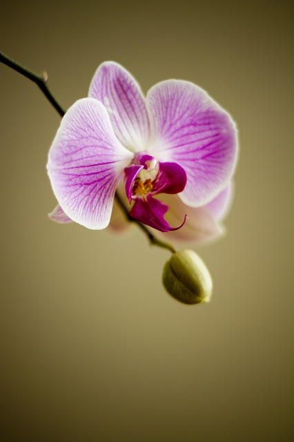 Orchid ~ 10 Most Common Flowers and Their Meanings ~ https://facthacker.com/most-common-flowers-and-their-meanings/