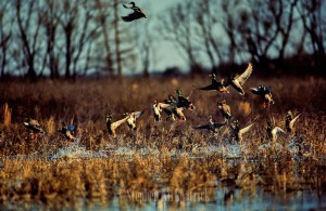 Colorado Duck Hunting pond