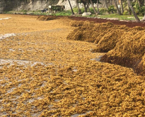 PROZ Seaweed Processing