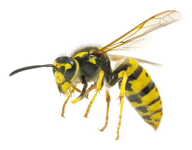 wasp control service utah