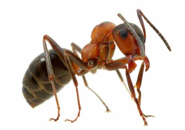 ant control service utah