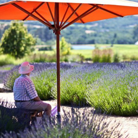 Mantanzas Creek Winery