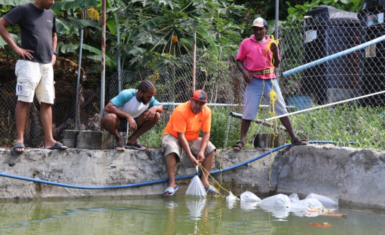 AQUACULTURE FARMING ON ISLAND MAKING SIGNIFICANT STRIDES JIMMIT HATCHERY 3RD SUCCESSFUL DISTRIBUTION POST HURRICANE MARIA