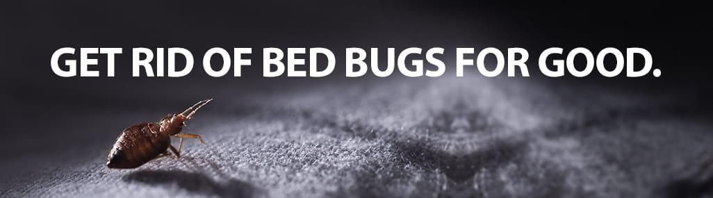 Charlotte NC Bed Bug Control