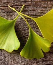 Bioenergetic by Design Blog