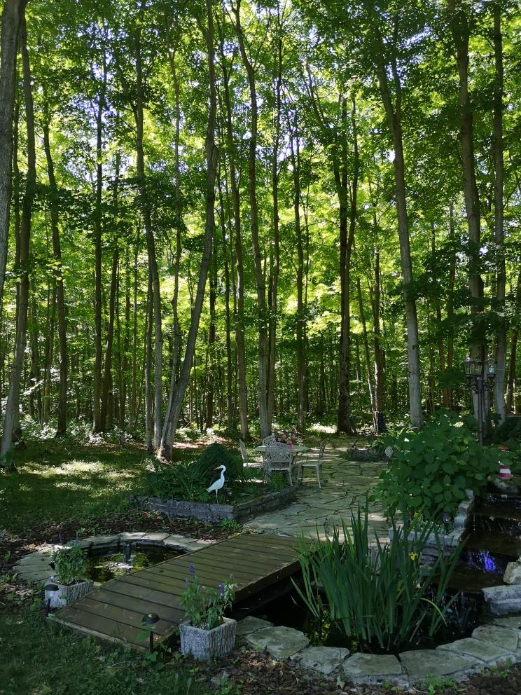 mapl haven backyard