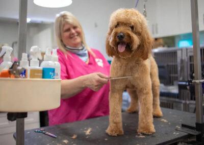 image dog grooming