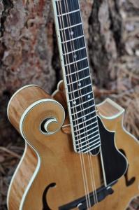 mandolin-f5-160-013