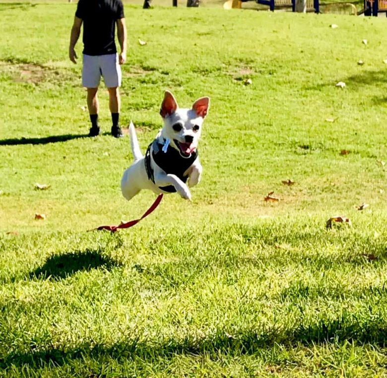 HOW TO KEEP YOUR DOG COOL AND OTHER SUMMER SAFETY TIPS