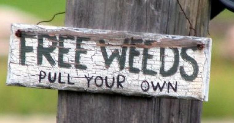 Weeding Worries
