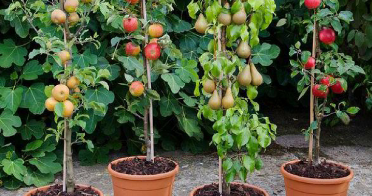 Container Gardening for Food