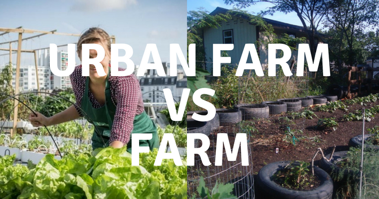Urban Farm vs Farm: The Difference