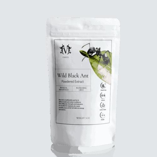 wild black ant