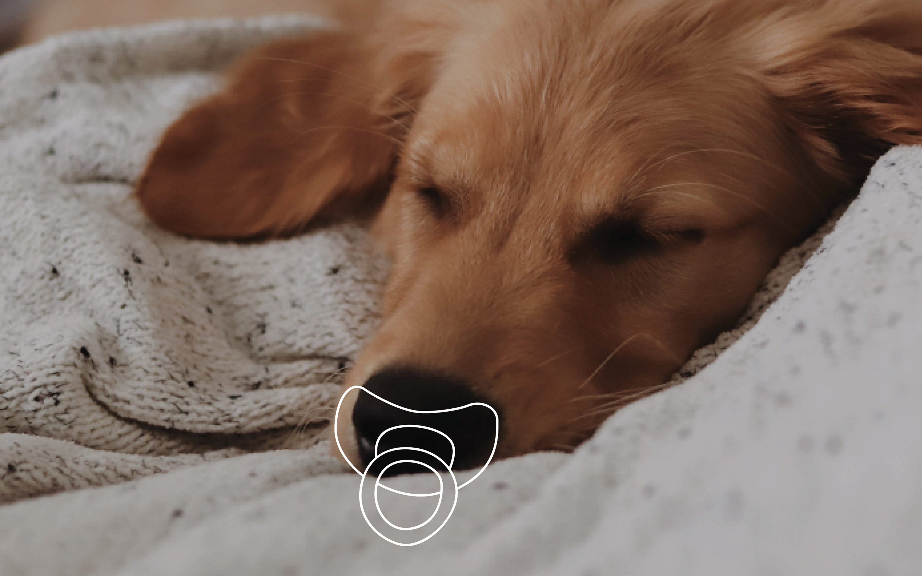 Photo of a puppy sleeping with an illustrated pacifier in its mouth.