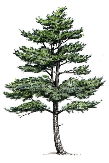 The Pines at Center Harbor
