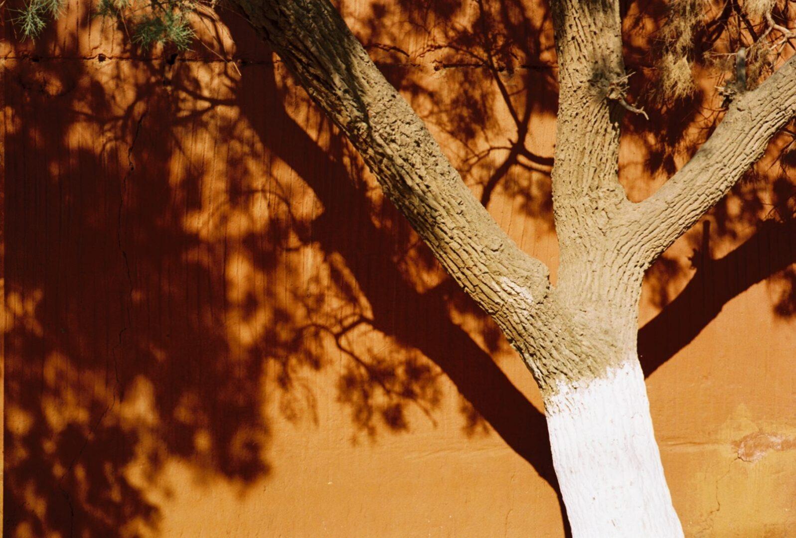 Sahara-2008-039-1600x1082