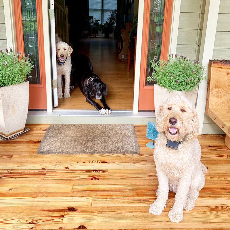 Gamble Family Adventures Family Travel Blog | About Puppies | Image