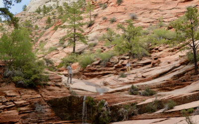 Day 182: Zion National Park, UT