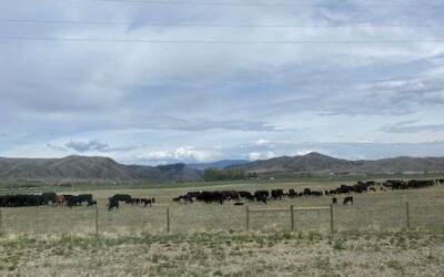 Day 199: Travel Day | Yellowstone National Park to Helena, MT