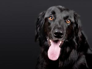 dog-1194087_1920