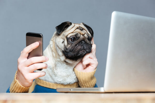 dog-on-laptop