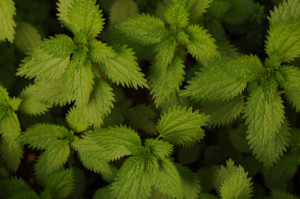 Herbs2500