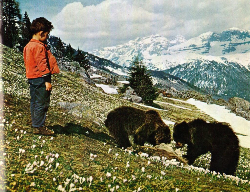 Bears in Cavria