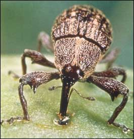 2016 N.C. boll weevil assessment remains at $1 per acre