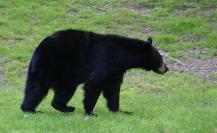 Appalachian Trail Hiker Bitten By Bear While Sleeping