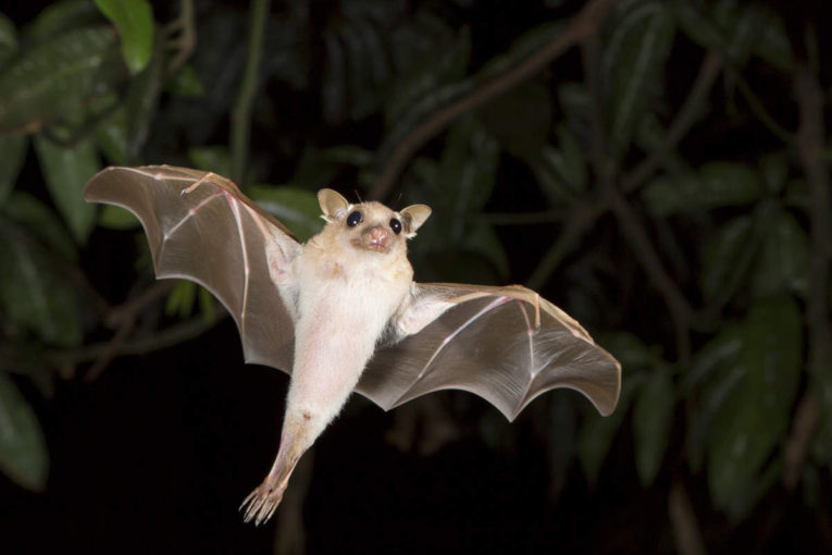 Wildlife Commission Offers Bat-Friendly Advice for Homeowners