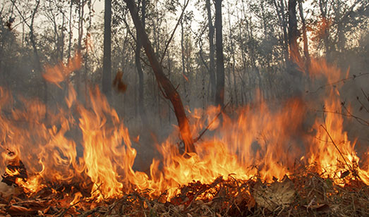 Prescribed Burns To Take Place