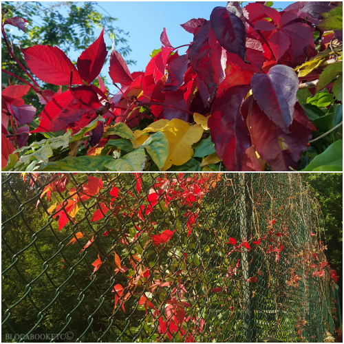 Blue Skies, Autumn, Seasons, Blog A Book Etc, Fay