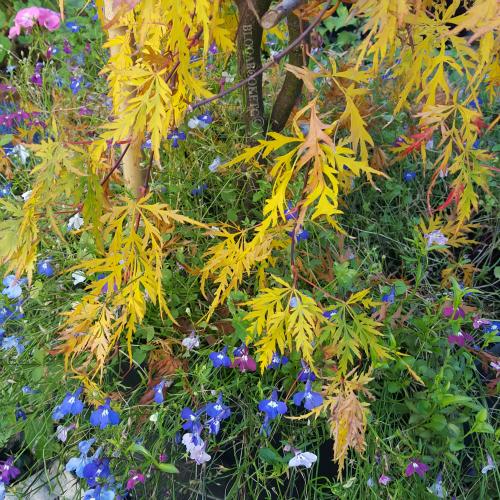 Yellow, Autumn, Seasons, Blog A Book Etc, Fay