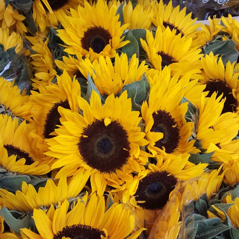 Sunflowers, Easter Weekend, Easter, Bank Holiday, Flowers, Flower Market, Blog A Book Etc, Fay