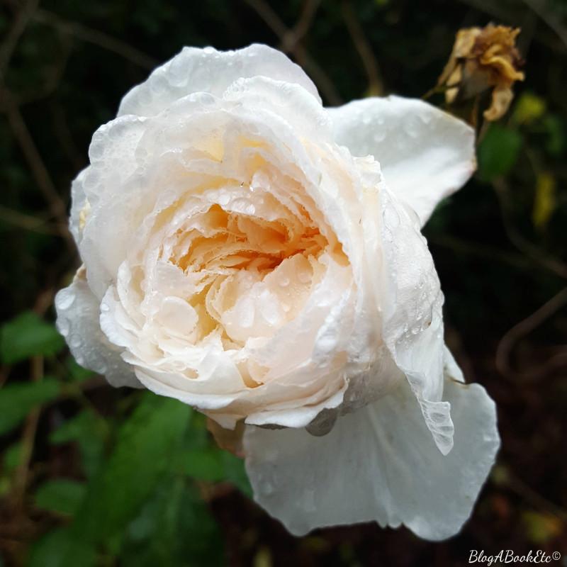 4 Handy Hygiene Tips, White Rose, Blog A Book Etc, Fay