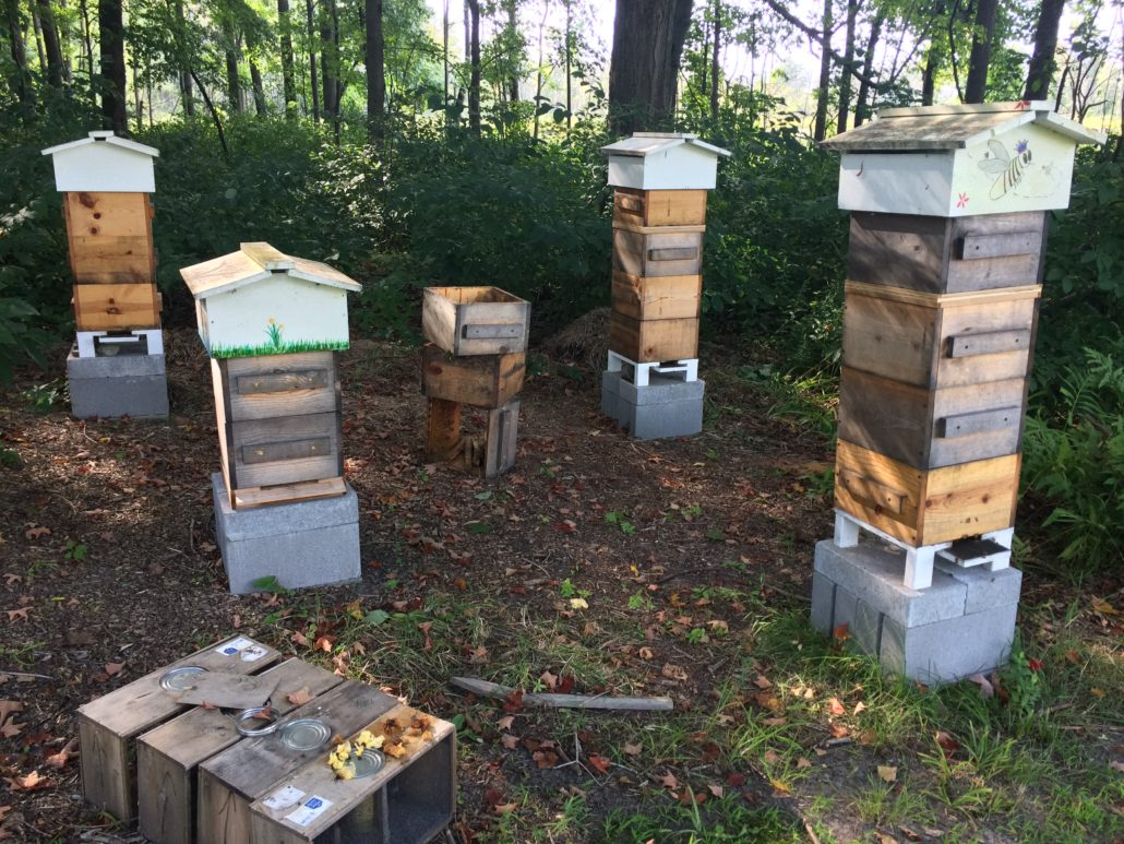 warre hive apiary
