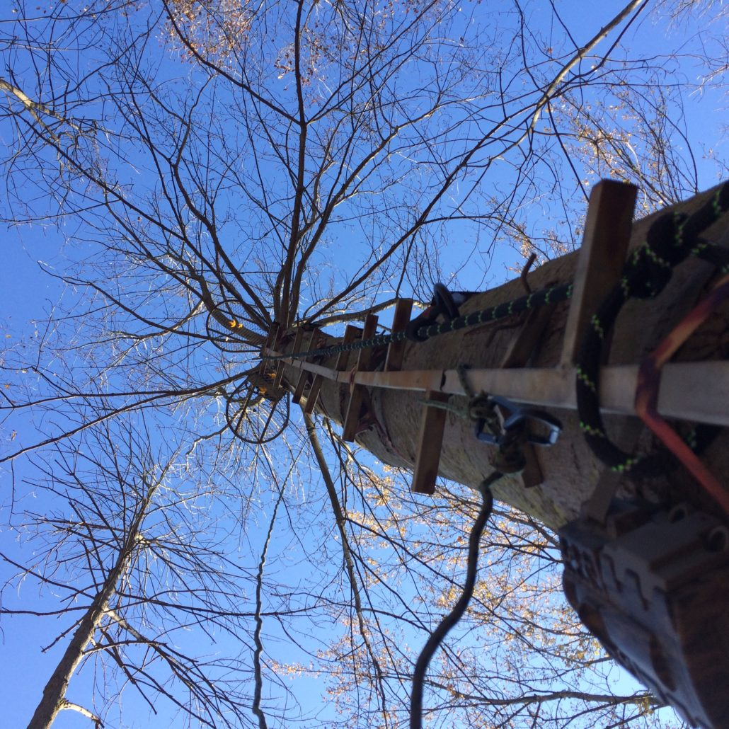 tree stand safety fall prevention