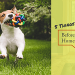 5 Things to Consider Before Building a Home with Pets