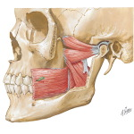 TMJ rehabilitation anatomy