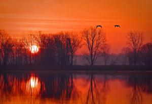 Swan a' Flyin