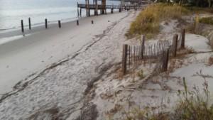 348-Tybee Island Beach (BEST OF MERIT)