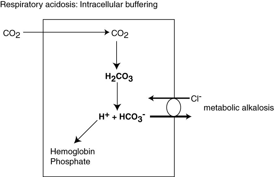 Buffering a respiratory acidosis