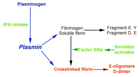 The process of D dimer production