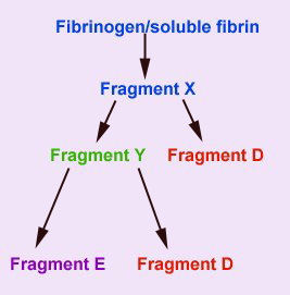 The FDPs, fragment D and E are end products of cleavages from fibrinogen/fibrin.