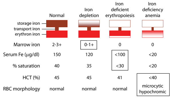 Iron deficiency anemia chart