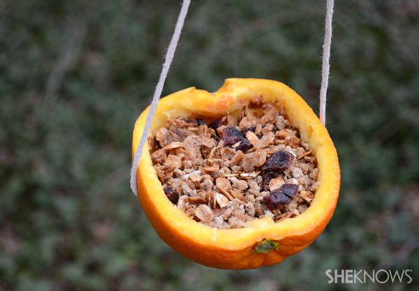 build-a-diy-bird-feeder-main