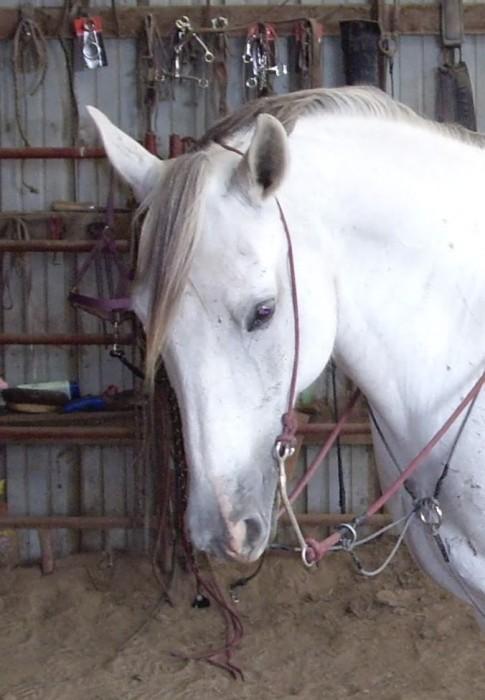 Horse Bridle HorseForum