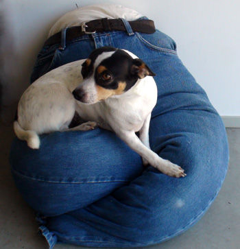 No Sew Blue Jeans Pet Bed