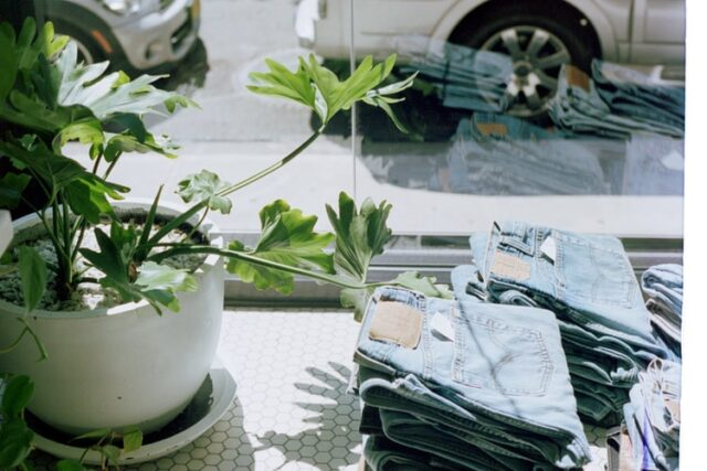 plant in the window of a shop